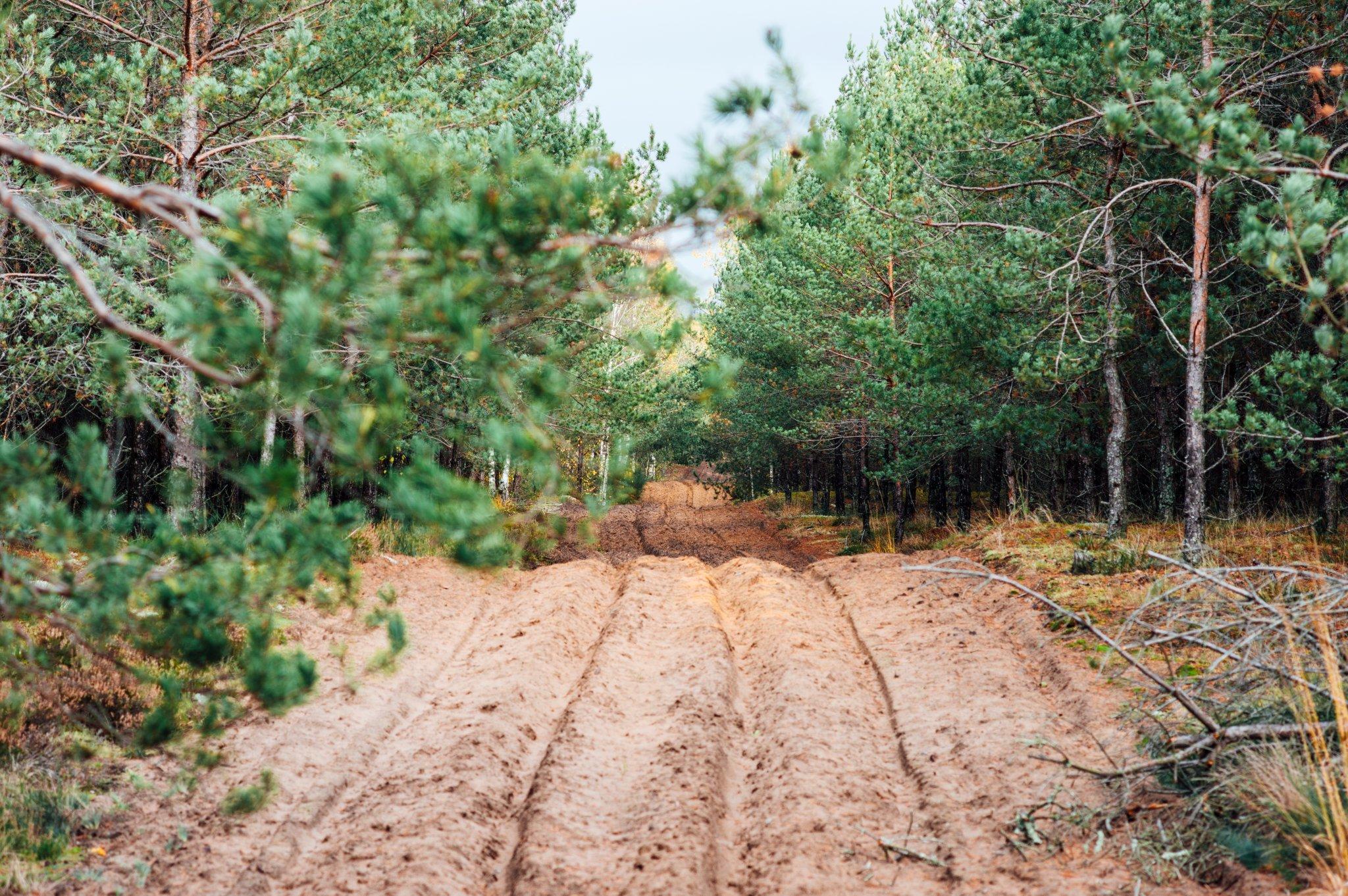 Žemyninė kopa Dumsių girioje II - Vilmantas Ramonas