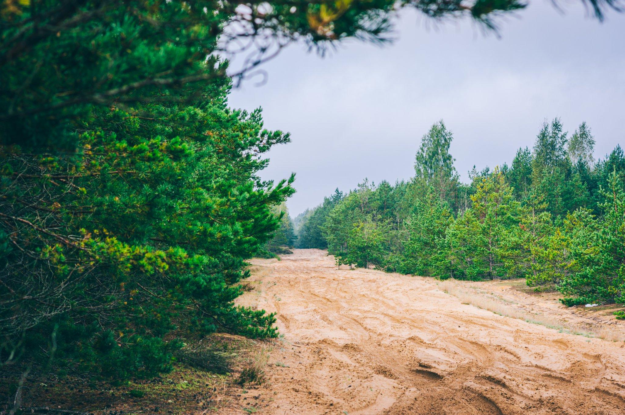 Žemyninė kopa Dumsių girioje