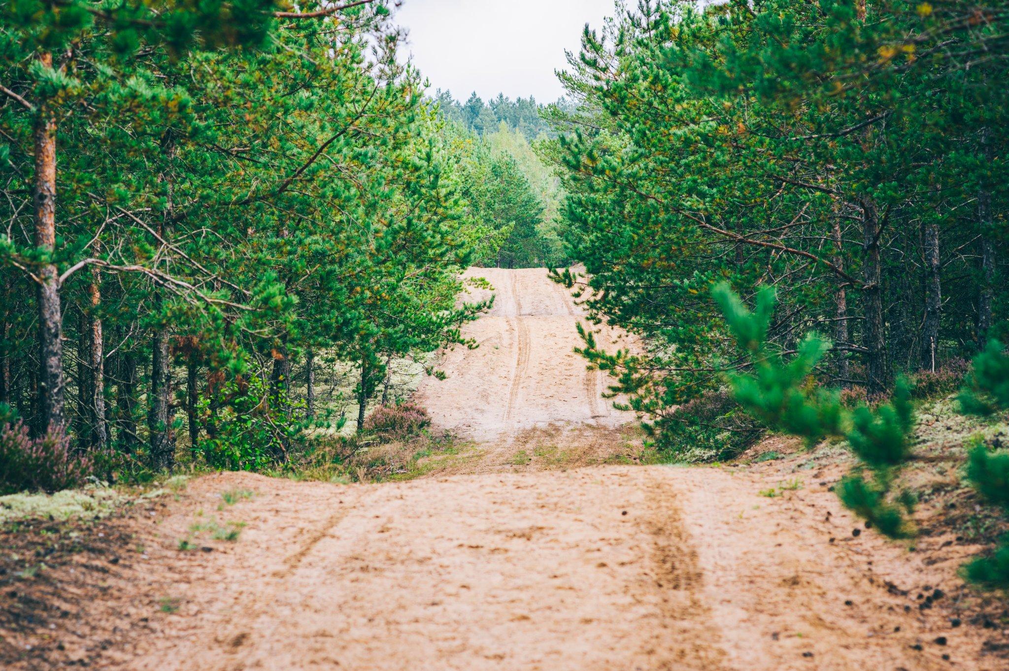 Žemyninė kopa Dumsių girioje - Vilmantas Ramonas