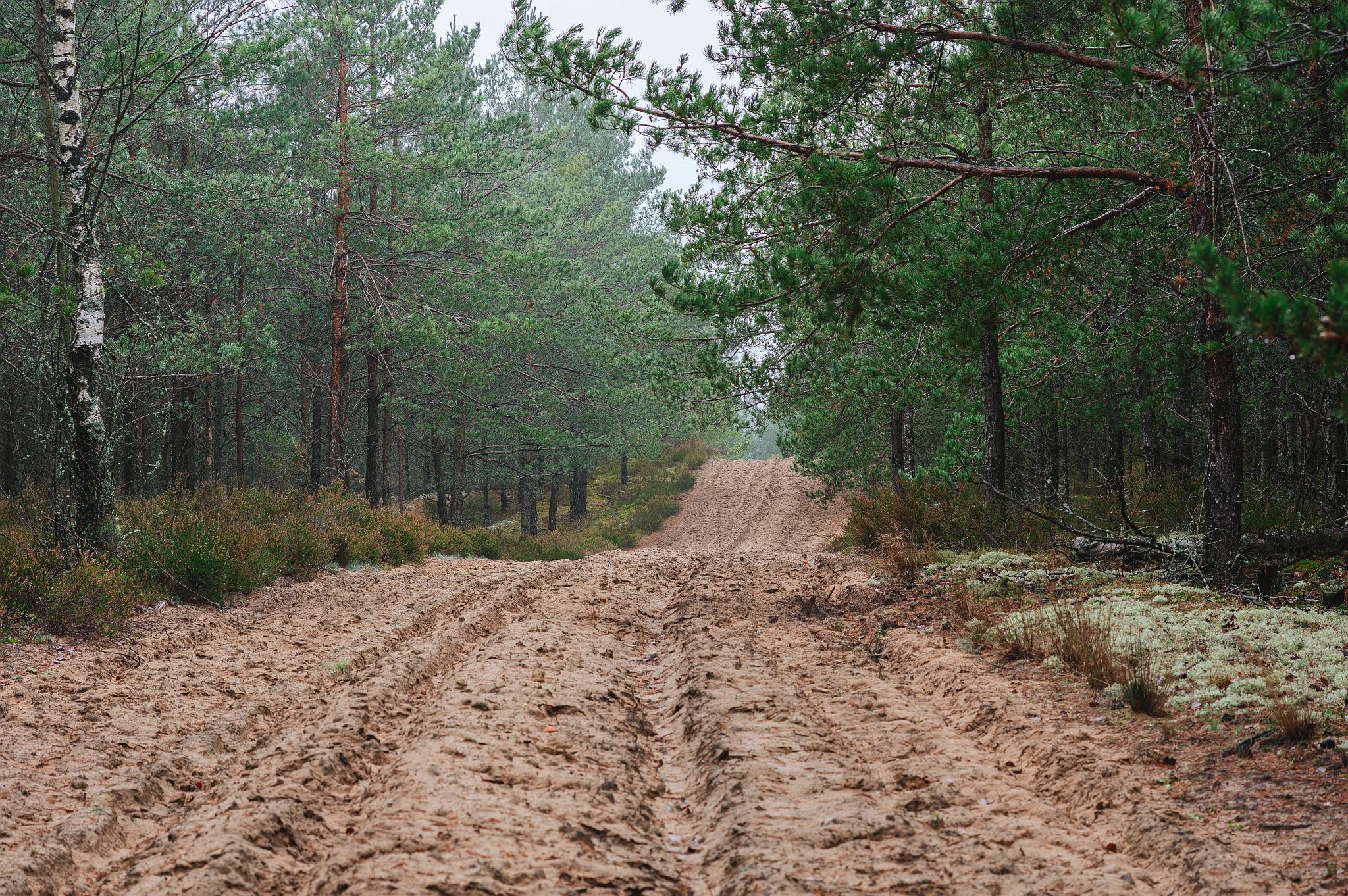 Žemyninė kopa Dumsių girioje III - Vilmantas Ramonas