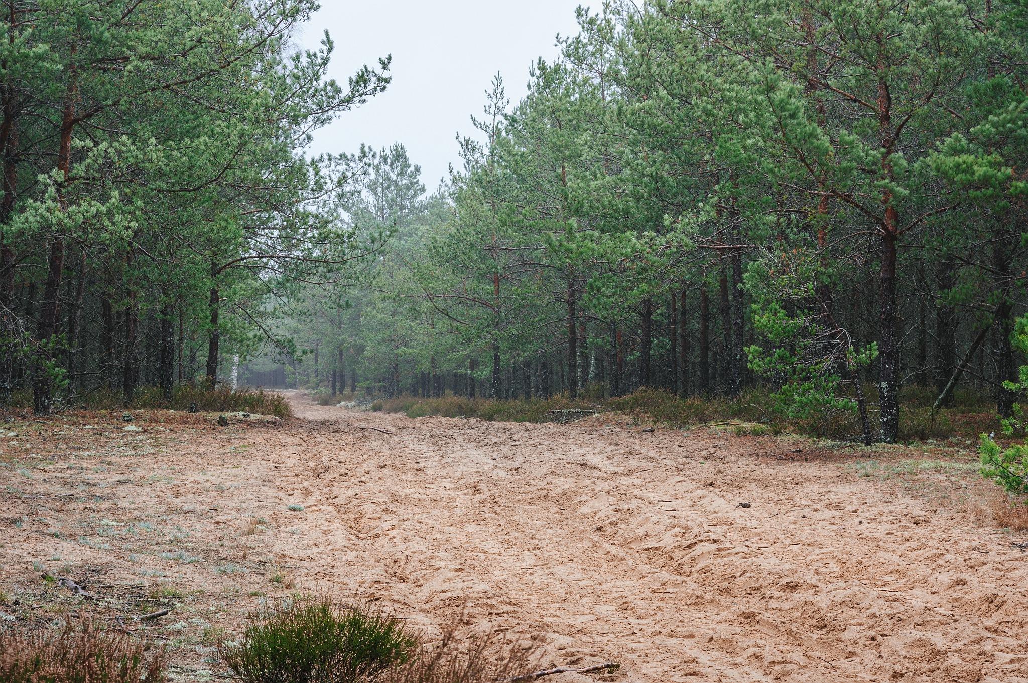 Žemyninė kopa Dumsių girioje III