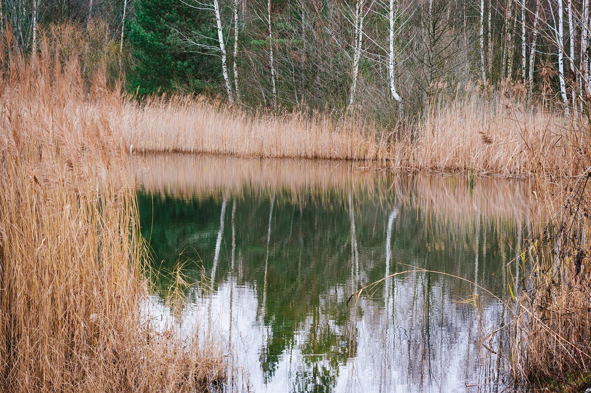 Atspindys - Vilmantas Ramonas