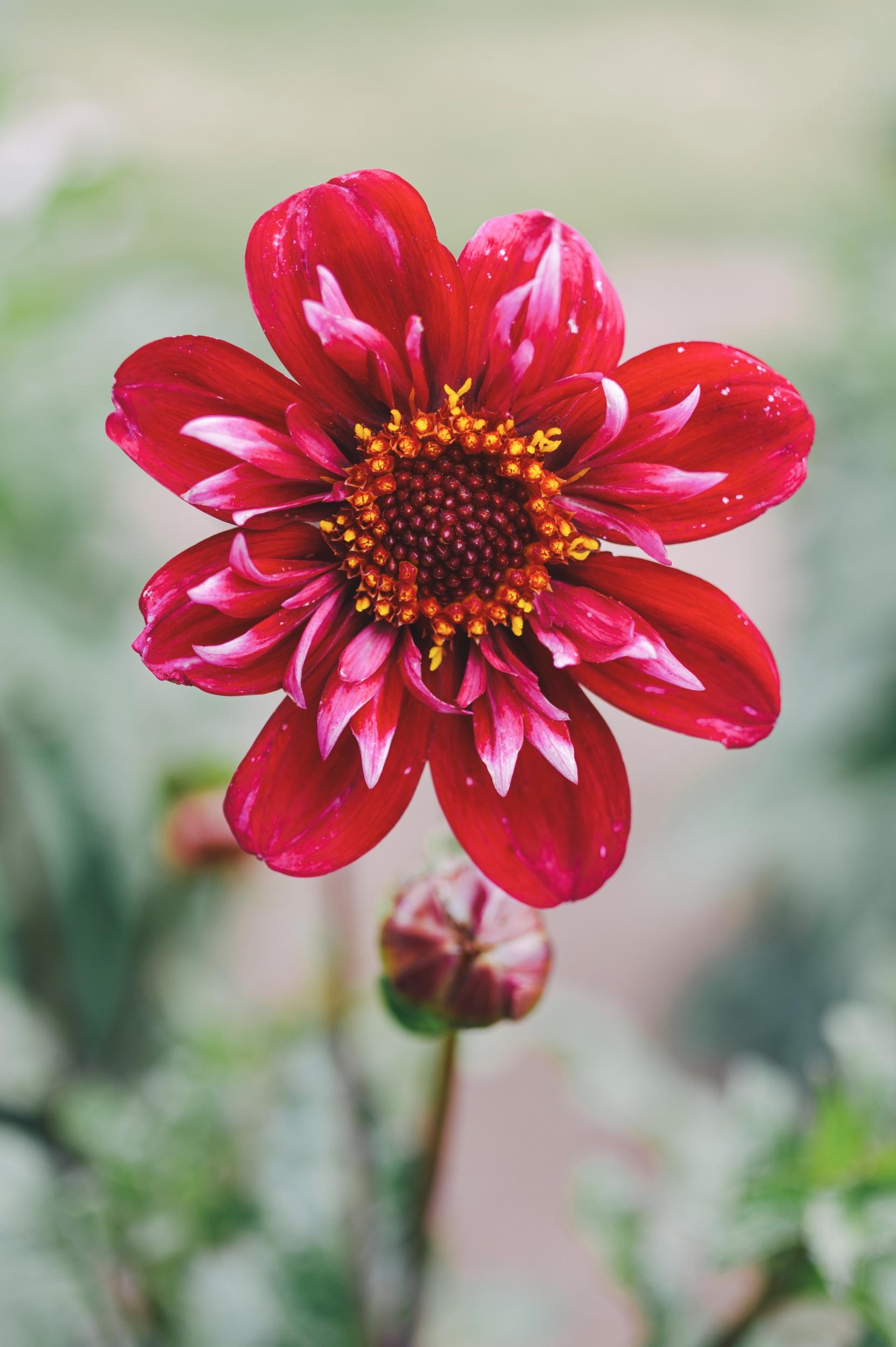Gėlės I - Vilmantas Ramonas