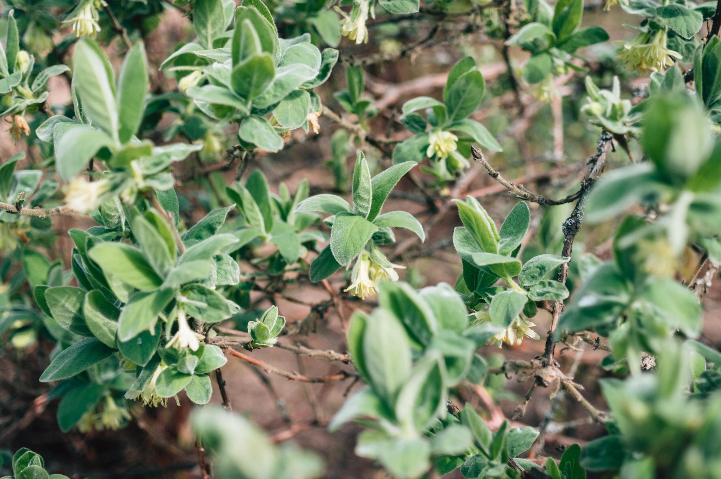 Dubravos Arboretumas - Vilmantas Ramonas