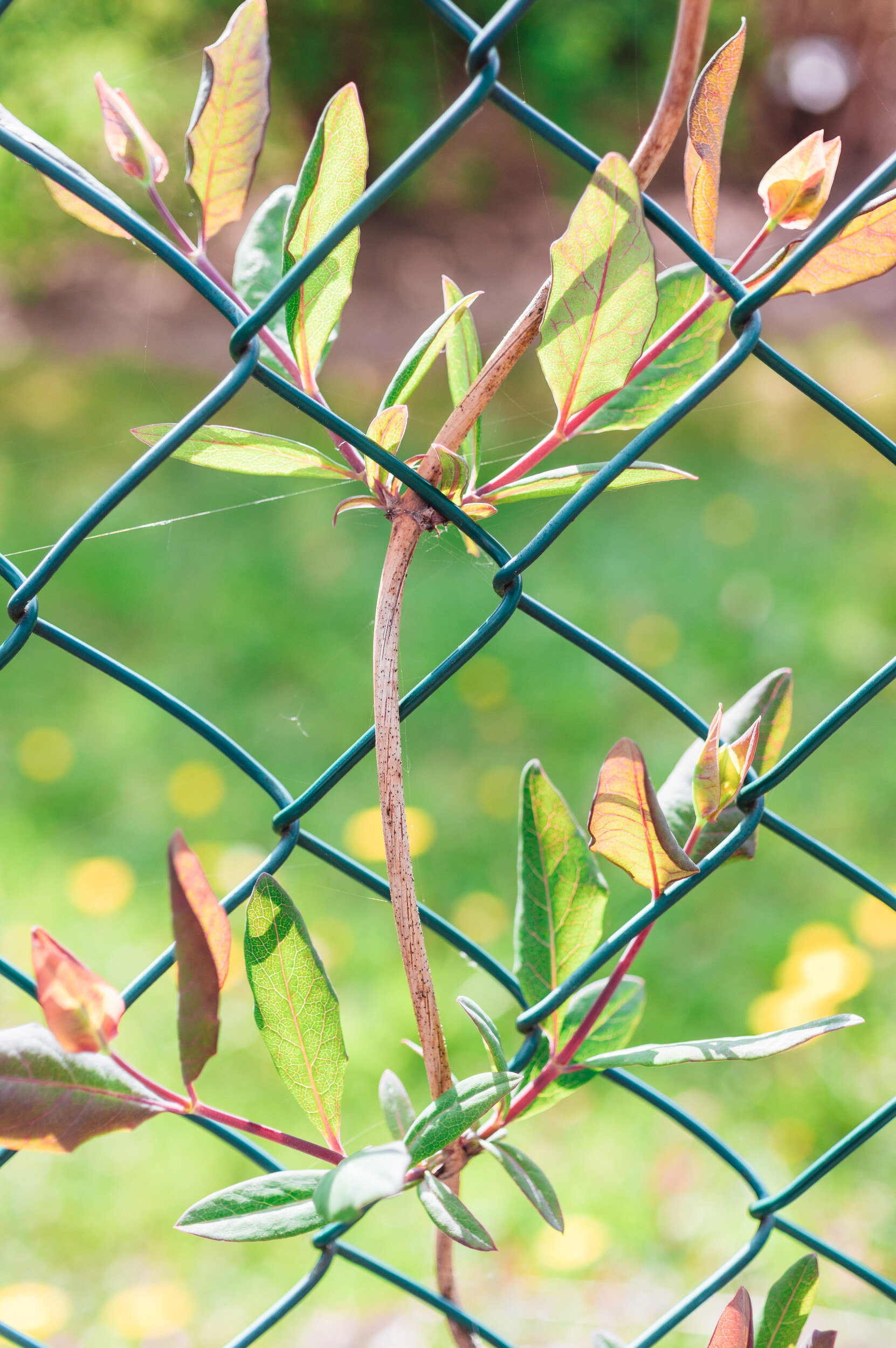 Žalia tvora