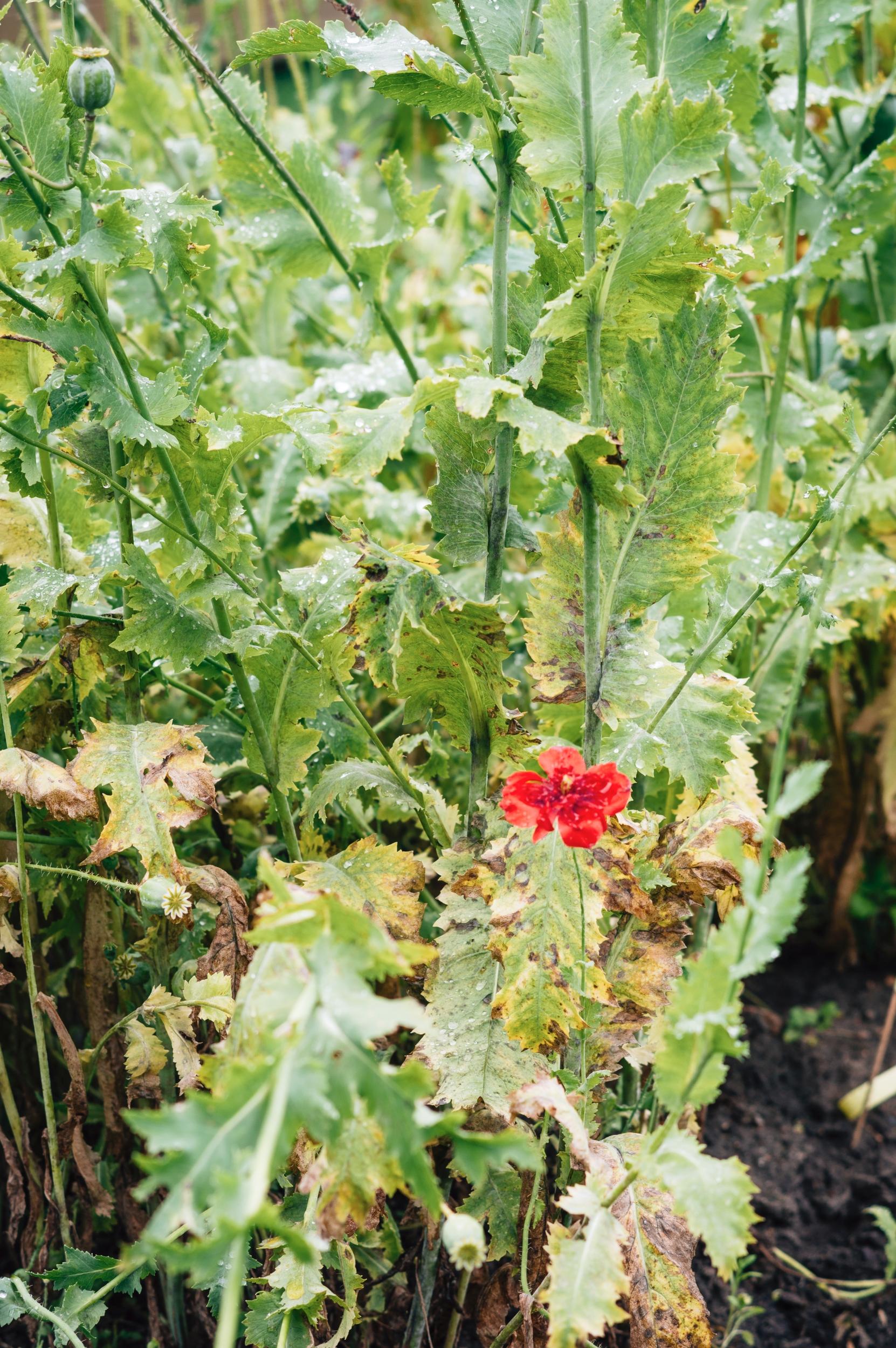 Gėlės II - Vilmantas Ramonas