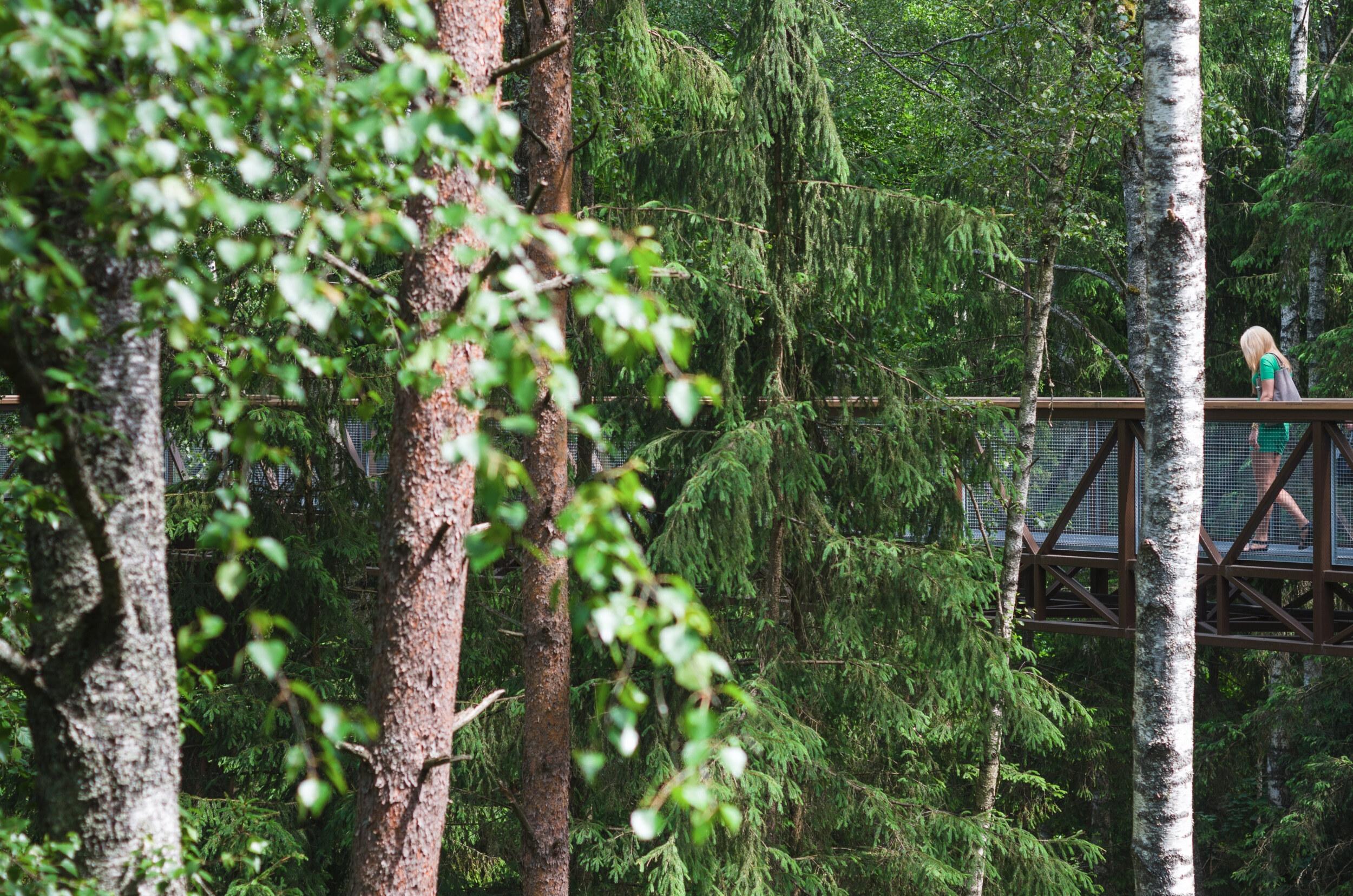 Medžių lajų takas - Vilmantas Ramonas