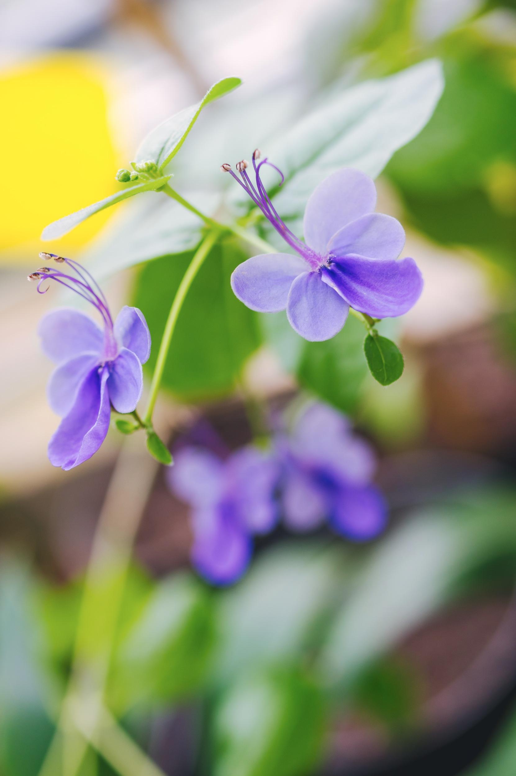 Pavasaris - Vilmantas Ramonas