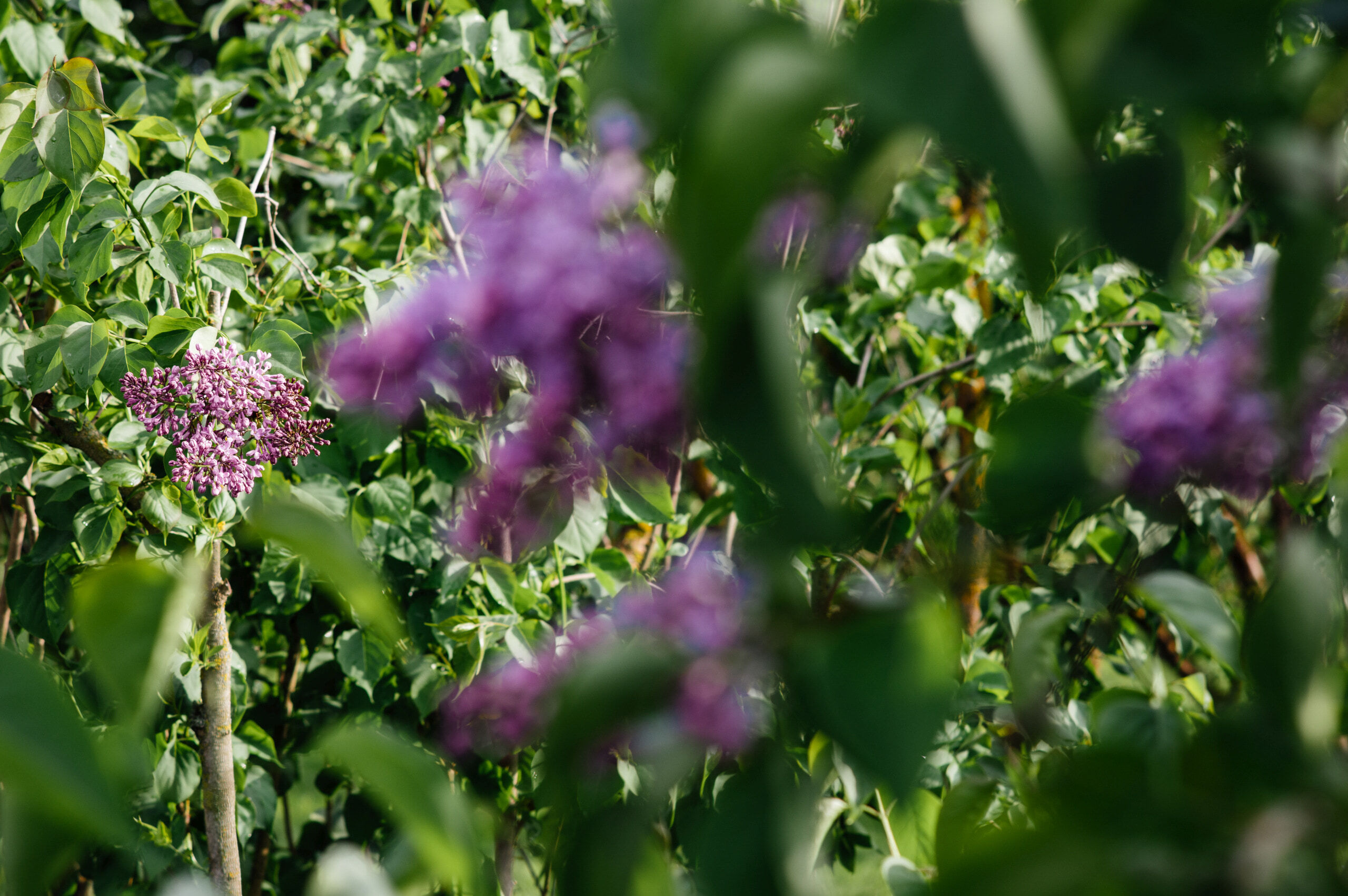 Vakaras botanikos sode - Vilmantas Ramonas
