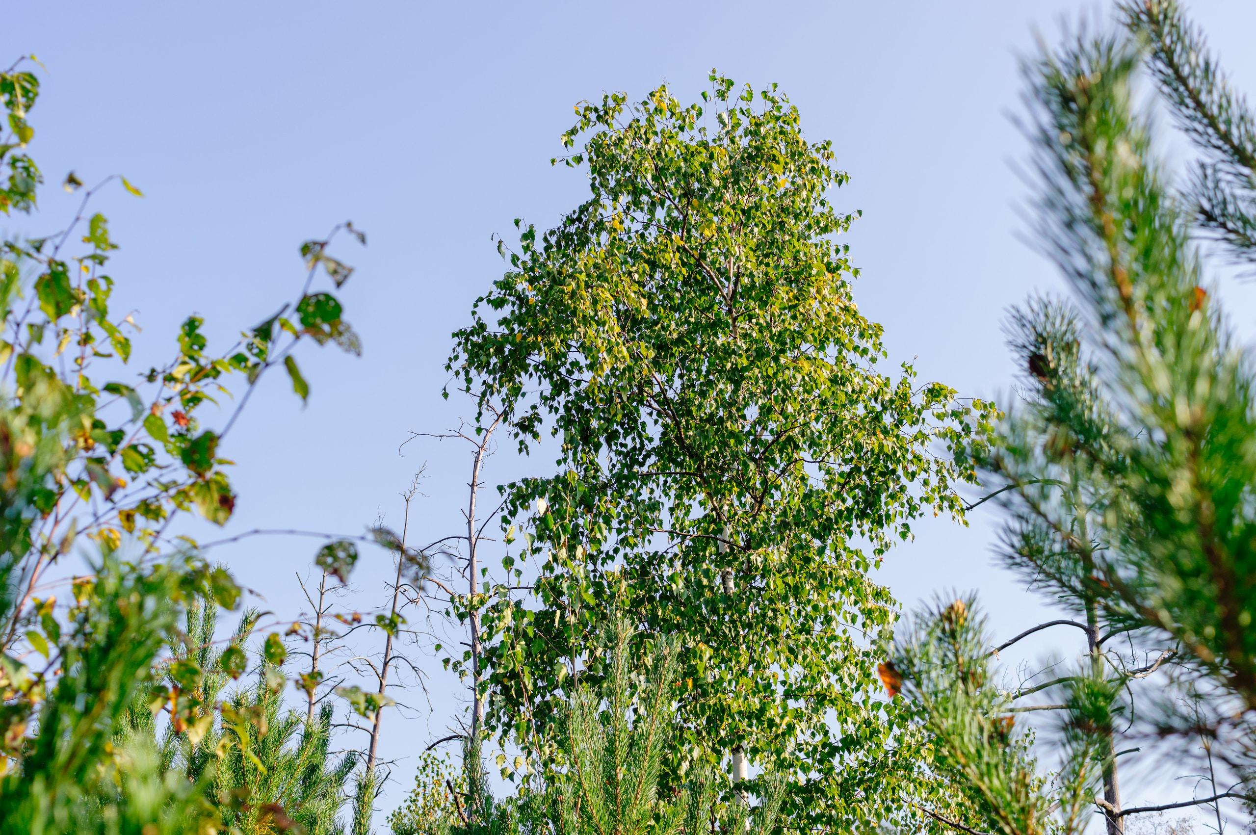 Pirmieji rudens ženklai Dubravos pelkėje - Vilmantas Ramonas